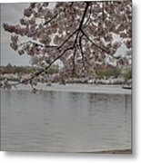 Cherry Blossoms - Washington Dc - 011336 Metal Print by DC Photographer