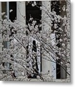 Cherry Blossoms With Jefferson Memorial - Washington Dc - 01131 Metal Print by DC Photographer