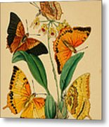 Chinese Butterflies 1847 Metal Print by Philip Ralley
