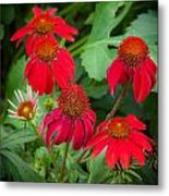 Coneflowers Echinacea Red  Metal Print by Rich Franco