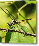 Dragonfly Metal Print by Steven  Taylor