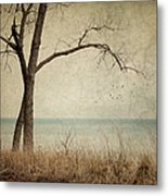 Drifting Metal Print by Amy Weiss