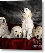 Festive Puppies Metal Print by Angel  Tarantella