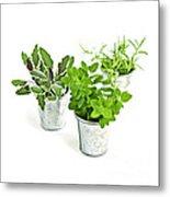 Fresh Herbs Metal Print by Elena Elisseeva