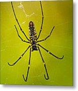 Giant Wood Orb Spider Metal Print by Robert Jensen