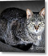 Grey Cat Portrait Metal Print by Elena Elisseeva