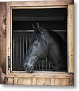 Horse In Stable Metal Print by Elena Elisseeva