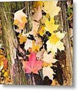 Maple Leaves Metal Print by Steven Ralser