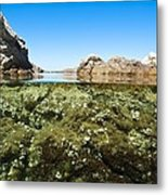 Marine Algae Metal Print by Science Photo Library