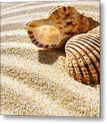 Seashell And Conch Metal Print by Carlos Caetano
