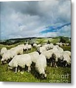 Sheep In The Field Metal Print by Jelena Jovanovic