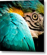 Sleeping Beauty Metal Print by Karen Wiles