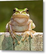 Someone Watching Over Me Metal Print by Mimi Ditchie