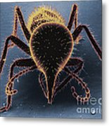Termite Soldier Metal Print by David M. Phillips
