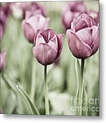 Tulip Garden Metal Print by Frank Tschakert