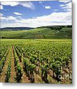 Vineyard Of Cotes De Beaune. Cote D'or. Burgundy. France. Europe Metal Print by Bernard Jaubert