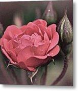 Vintage Rose No. 4 Metal Print by Richard Cummings