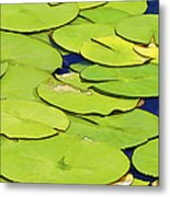 Water Lilly Metal Print by David Letts
