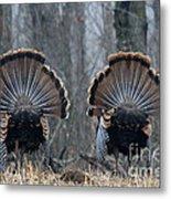Jake Eastern Wild Turkeys Metal Print by Linda Freshwaters Arndt