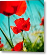 Poppy Field And Sky Metal Print by Raimond Klavins