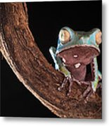 Tree Frog Metal Print by Dirk Ercken