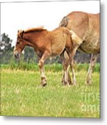 A Mare And Her Colt Metal Print by Penny Neimiller