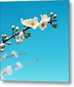 Almond Branch Metal Print by Carlos Caetano