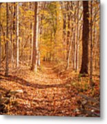 Autumn Trail Metal Print by Brian Jannsen