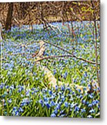 Carpet Of Blue Flowers In Spring Forest Metal Print by Elena Elisseeva