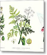 Common Poisonous Plants Metal Print by English School
