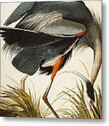 Great Blue Heron Metal Print by John James Audubon