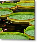 Lilly Pads Metal Print by Frozen in Time Fine Art Photography