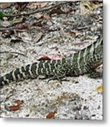 Lizard  Metal Print by Joyce Woodhouse