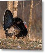 Male Eastern Wild Turkey Metal Print by Linda Freshwaters Arndt