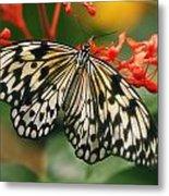 Paper Kite Butterfly Metal Print by Cindi Ressler