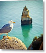 Seagull On The Rock Metal Print by Raimond Klavins