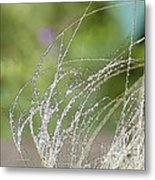 Summer Grass Metal Print by Artist and Photographer Laura Wrede