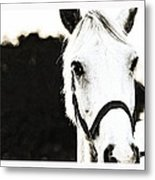 White Beauty Metal Print by Anusha Hewage