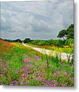 Wildflower Wonderland Metal Print by Lynn Bauer