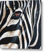 Zebra Metal Print by Ilse Kleyn