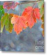 Autumn Leaves Metal Print by Mariusz Blach