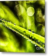 Dew On Grass Metal Print by Thomas R Fletcher