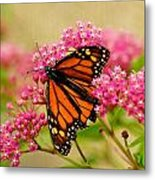 Monarch Butterfly Metal Print by Carol Toepke