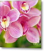 Orchids Metal Print by Carlos Caetano