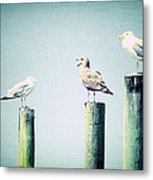 3 Seal Gulls Metal Print by Dick Wood