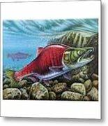 Sockeye Salmon Metal Print by JQ Licensing