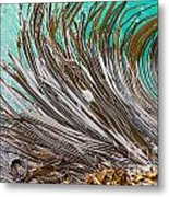 Bull Kelp Blades On Surface Background Texture Metal Print by Stephan Pietzko