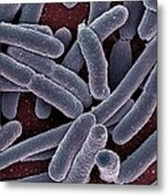 E Coli Bacteria Sem Metal Print by Ami Images