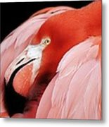 Flamingo Metal Print by Paulette Thomas