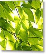 Green Spring Leaves Metal Print by Elena Elisseeva